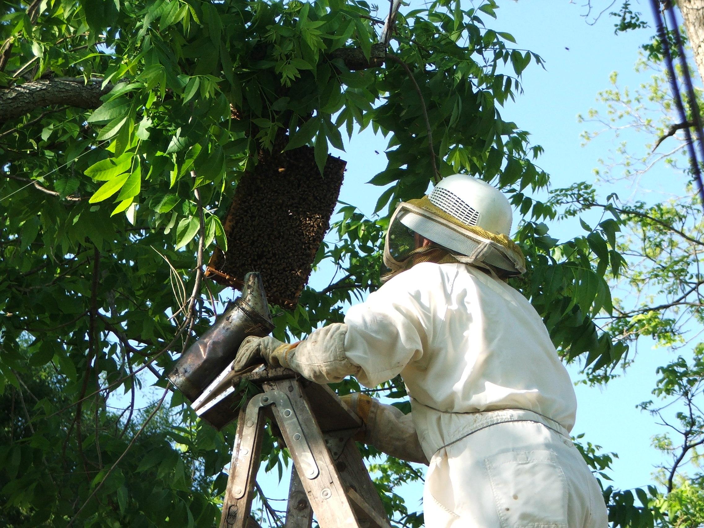 Как сделать ловушки для пчёл Ловушка для пчел своими ...  Пила 3 Ловушки