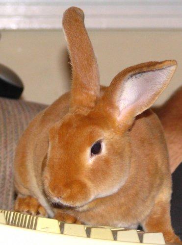 Приготовить зайца в домашних условиях 497