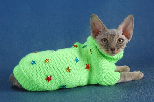 Одежда кошкам и собакам