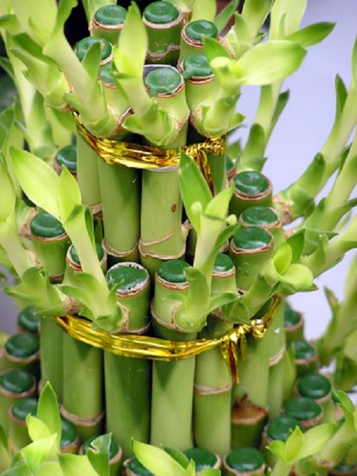 Бамбук лаки как сделать спираль