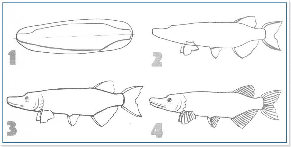 Как нарисовать щуку поэтапно