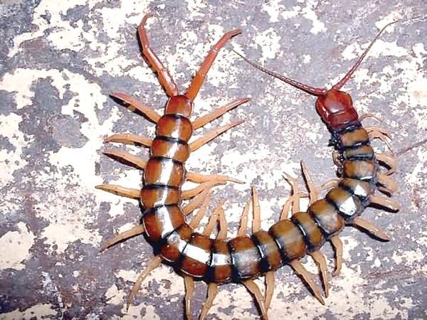 избавление от паразитов аюрведа