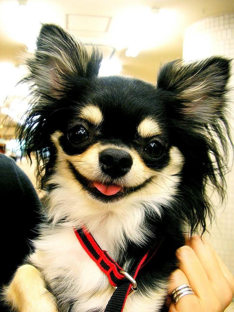 Как сделать игрушку для собаки фото 71