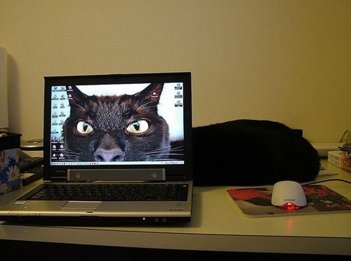 Картинка я тебя вижу ты сидишь у компьютера