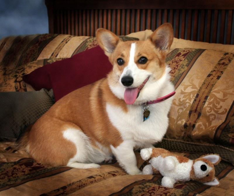 средство от глистов для собак минск