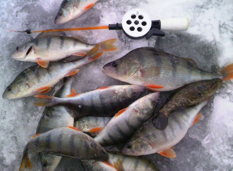 какая рыба ловится в конце января