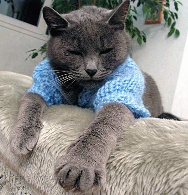 Как сделать попону для кошки фото 373