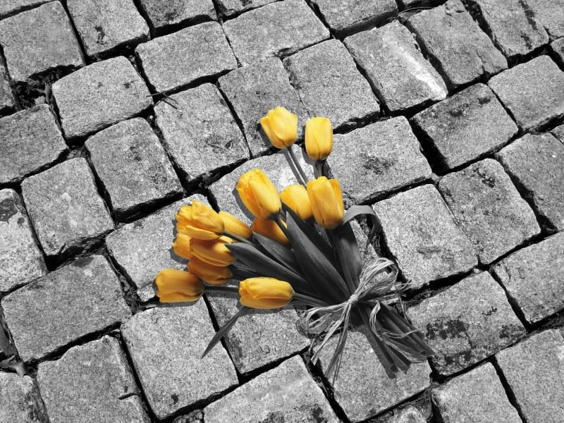 цветную деталь :: как сделать фото ...: www.kakprosto.ru/kak-121097-kak-na-cherno-beloy-fotografii-ostavit...