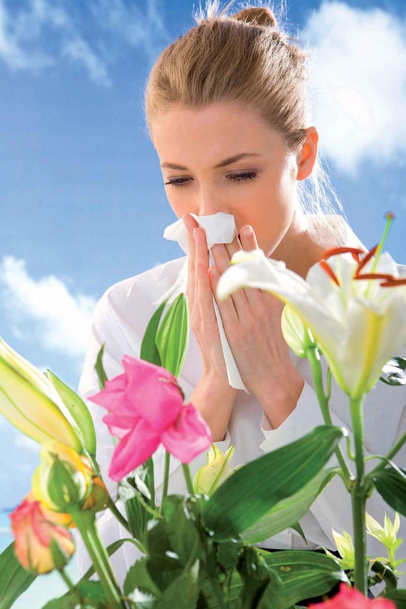 чем вылечить аллергию у собак