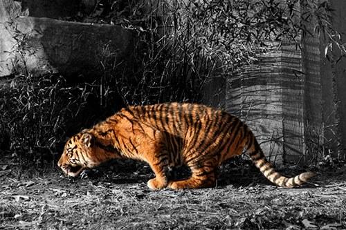 Как в Фотошопе сделать на черно-белом фото цветной элемент ...: http://www.kakprosto.ru/kak-125179-kak-v-fotoshope-sdelat-na-cherno-belom-foto-cvetnoy-element