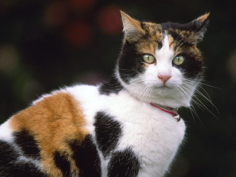 У котенка сухой