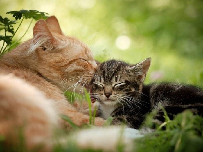 дает фото забота домашних животных о потомстве салатик можно готовить