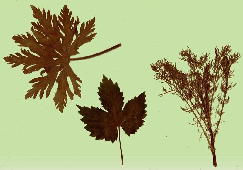 Какие можно сделать поделки из листьев