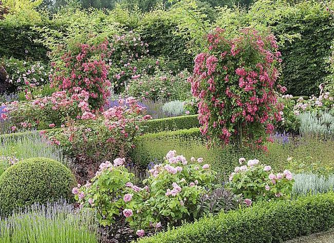 Цветы которые сажают в июне
