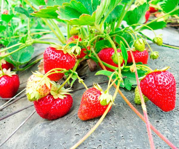 Как правильно поливать огород для получения хорошего урожая