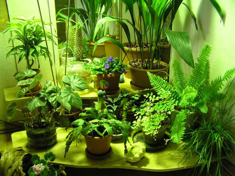 Цветы для счастья в доме - какие комнатные цветы приносят 95