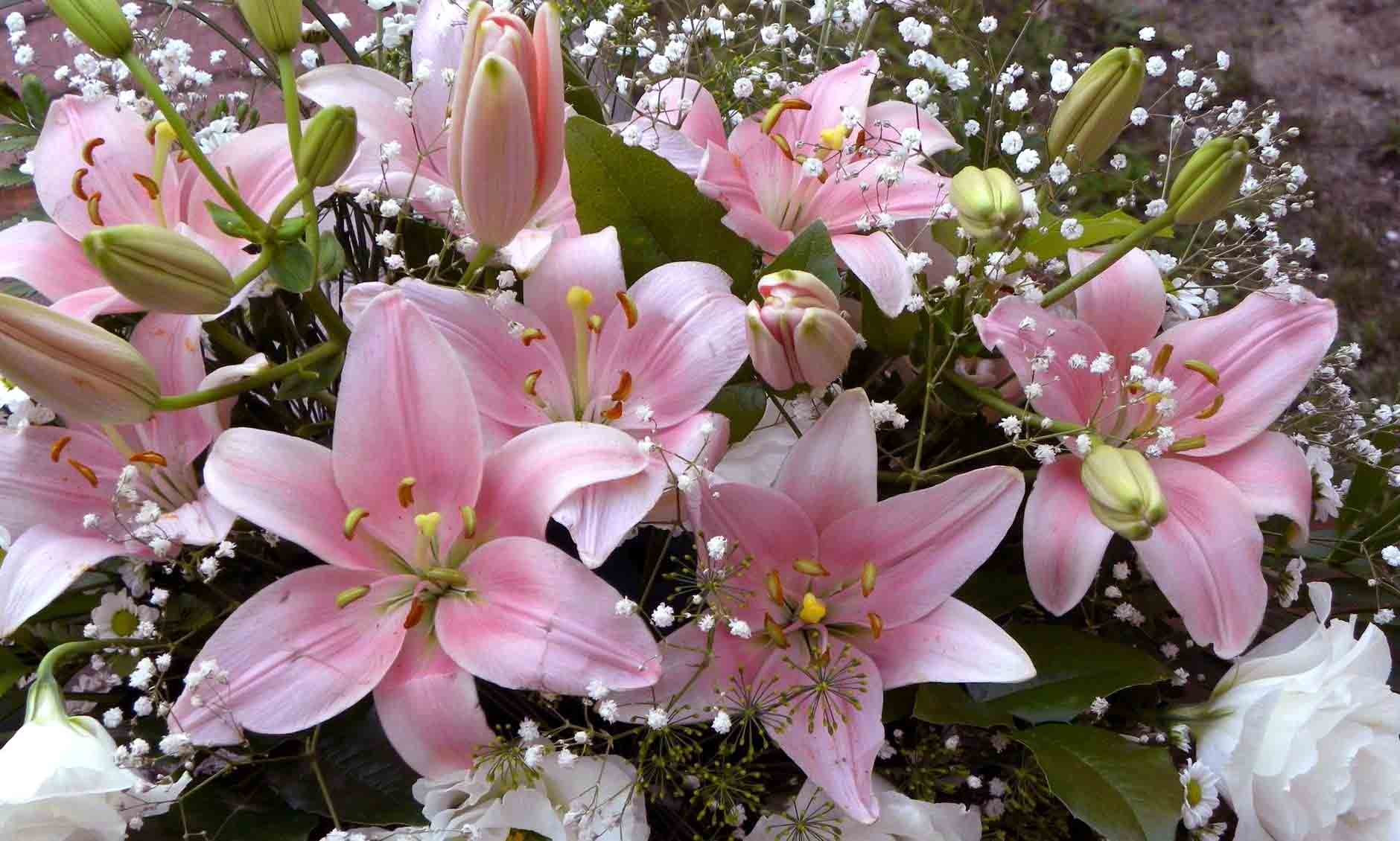 красивые букеты лилий с днем рождения зависит мощности миксера