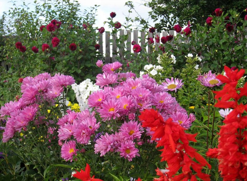 Цветы на огороде что сажать 556