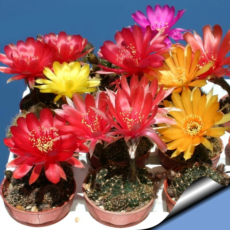 Как поливать комнатные цветы