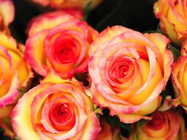 Как подарить розы на свадьбу