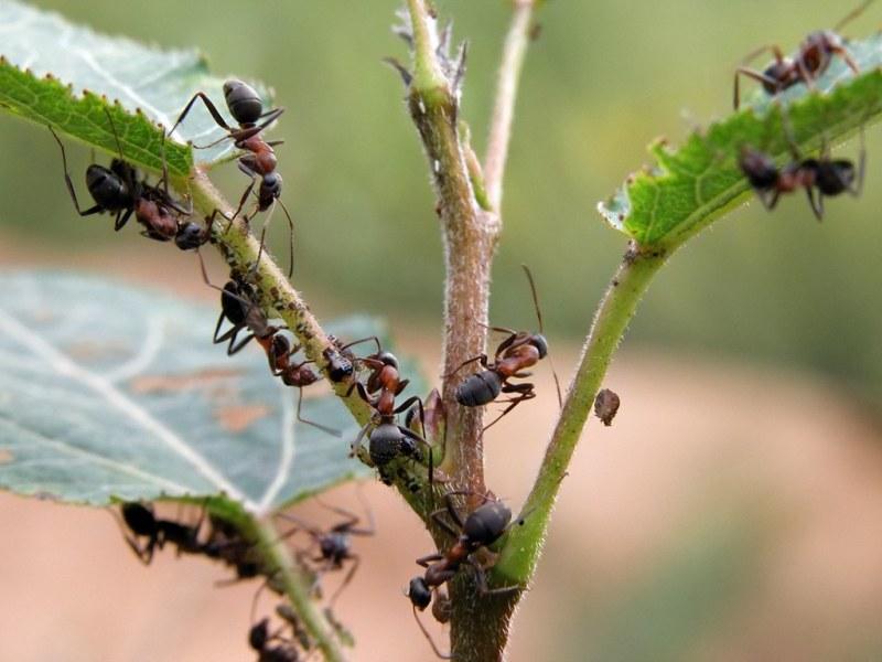 как лучше вывести паразитов из организма