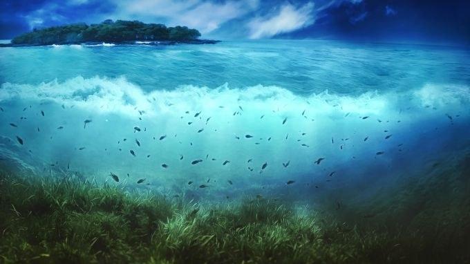 какая рыба водится на волге в самаре