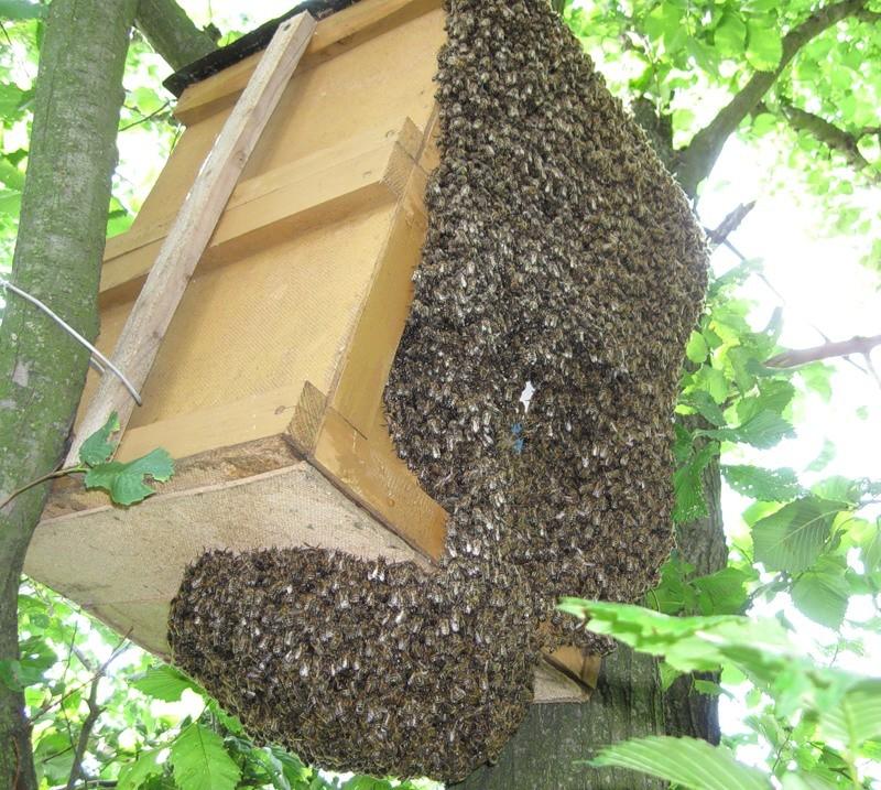 Как сделать ули для пчел