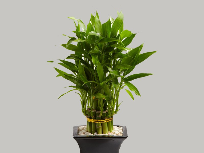 Почему у орхидеи желтеют листья, выясняем причины