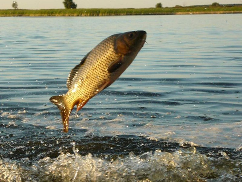 какая рыба клюет в жару на озере