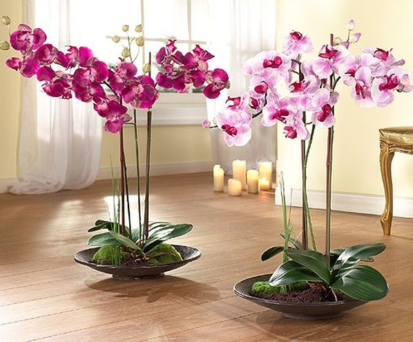 Не растут цветы на орхидее