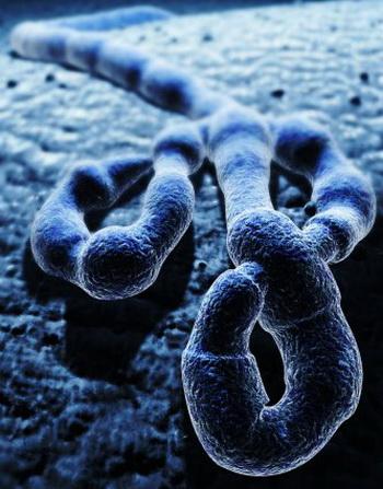 вирус эбола фото