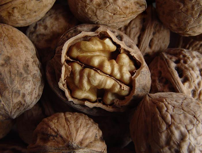 Настойка маньчжурского ореха: как приготовить и рецепты 74