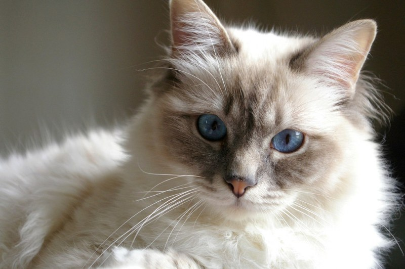 чем кормить кота при пищевой аллергии