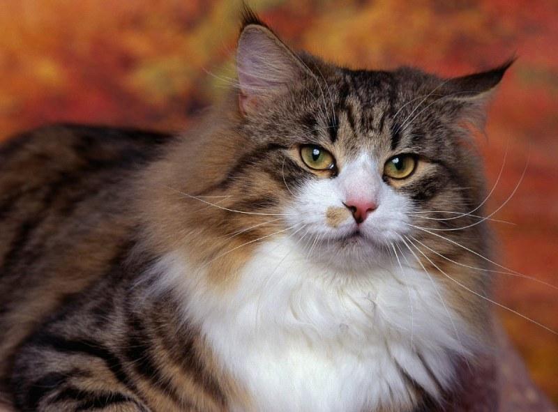 аллергия на кошек какие анализы