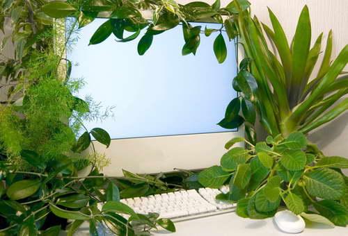 растения нейтрализуют негативные излучения от компьютера