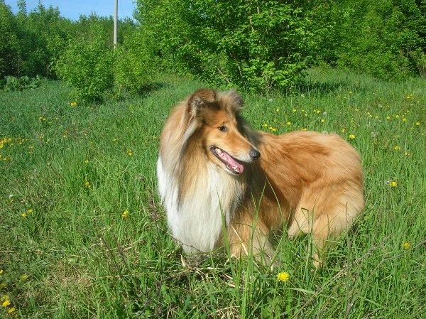 какую собаку можно завести при аллергии