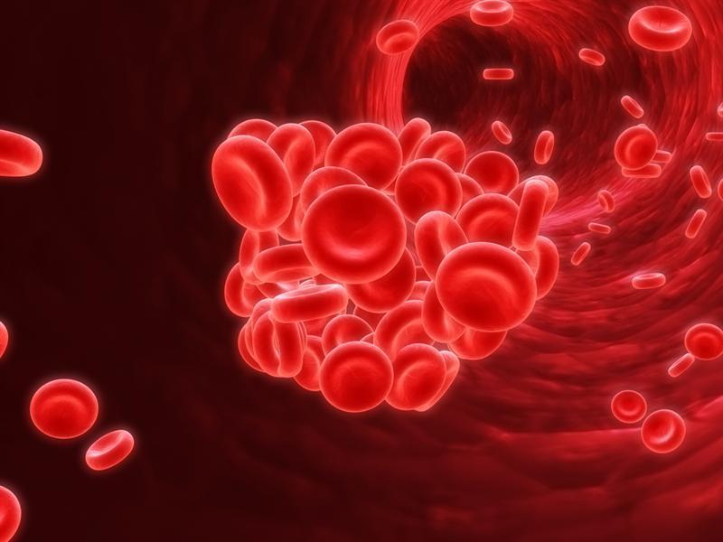 Эритроциты в крови человека