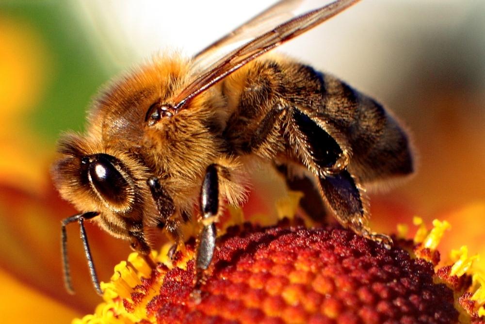Картинок о пчелах