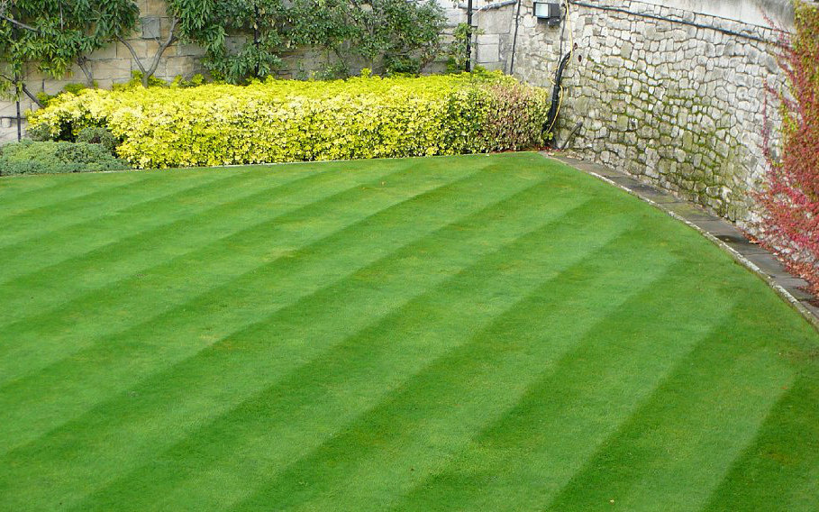 English lawn do it yourself