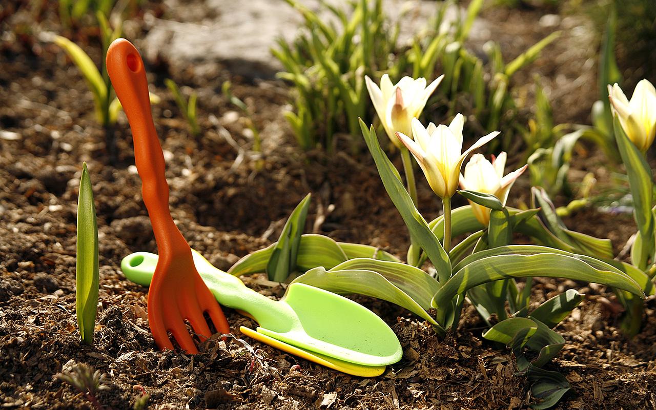 какие семена можно сеять в апреле