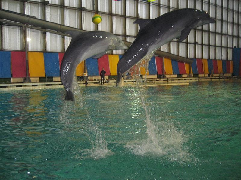 Плавание с дельфинами в Санкт-Петербурге. плавание в спб ...