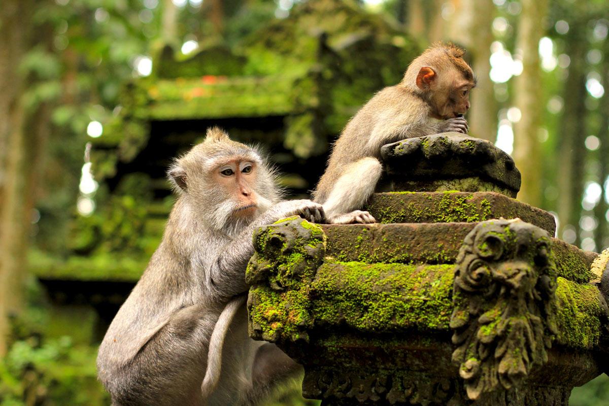 обезьяны в лесу