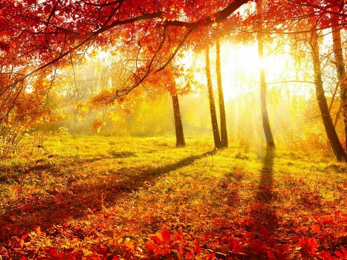 Деревья дают планете кислород