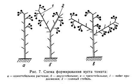 Схема пасынкование томатов в теплице