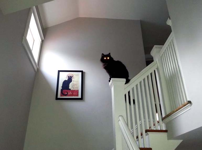 Кошка чистит ауру дома