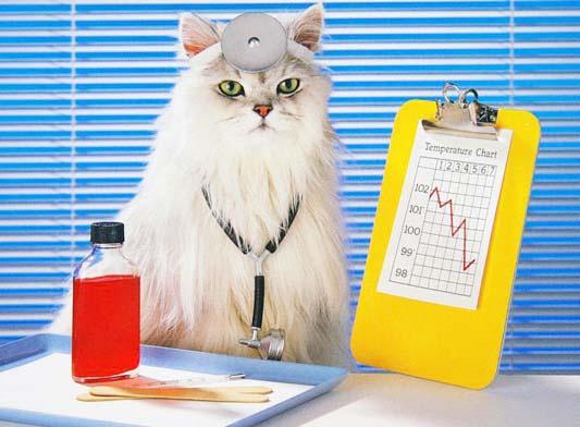 Как кошки лечат болезни людей