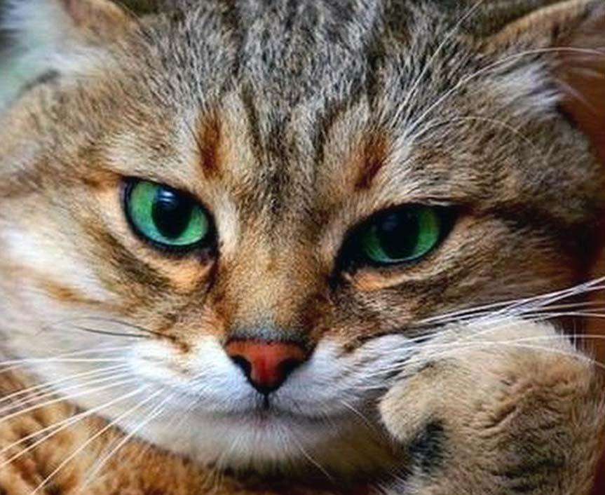 Кошка помогает бороться со стрессом и депрессией