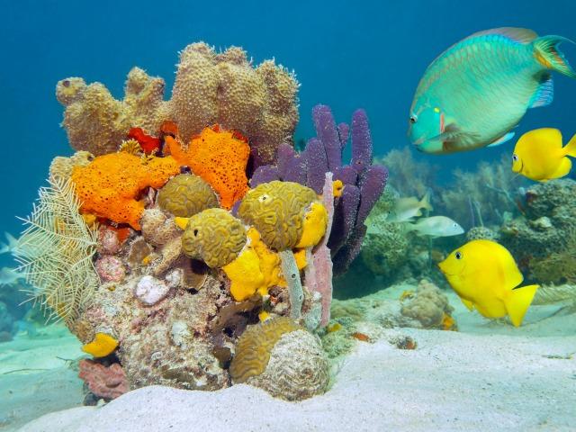 Талисман коралл