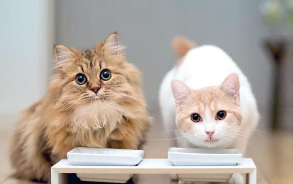 Выбор корма для кастрированных котов