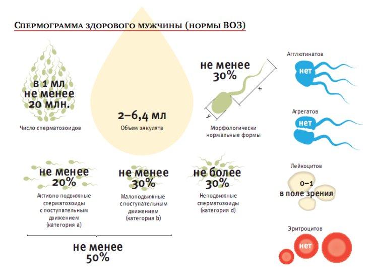 Общее количество сперматозоидов в эякуляте